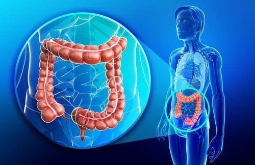 Fysiologie van de dikke darm: defecatiereflex