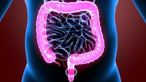 De geweldige fysiologie van de dikke darm