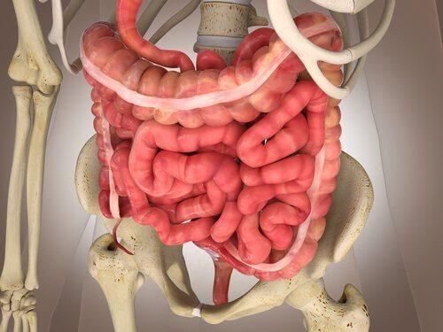 Fysiologie van de dikke darm: stoelgang