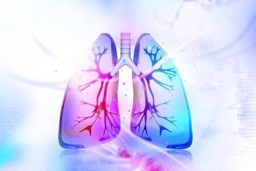 Probeer deze middelen om je longen te reinigen