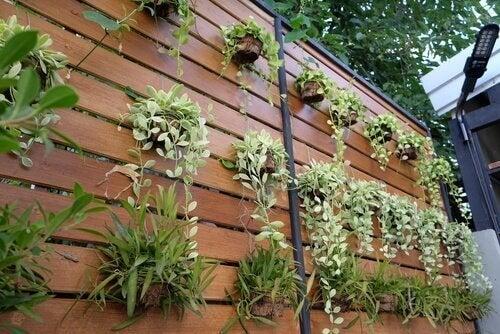 4 ideeën om je muur om te toveren tot een verticale tuin