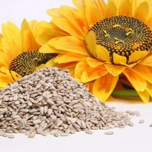 Zonnebloempitten helpen bij gewichtsverlies