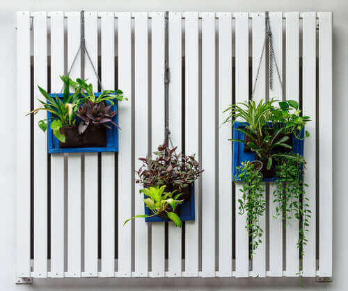 Een verticale tuin kan je met alledaagse voorwerpen maken