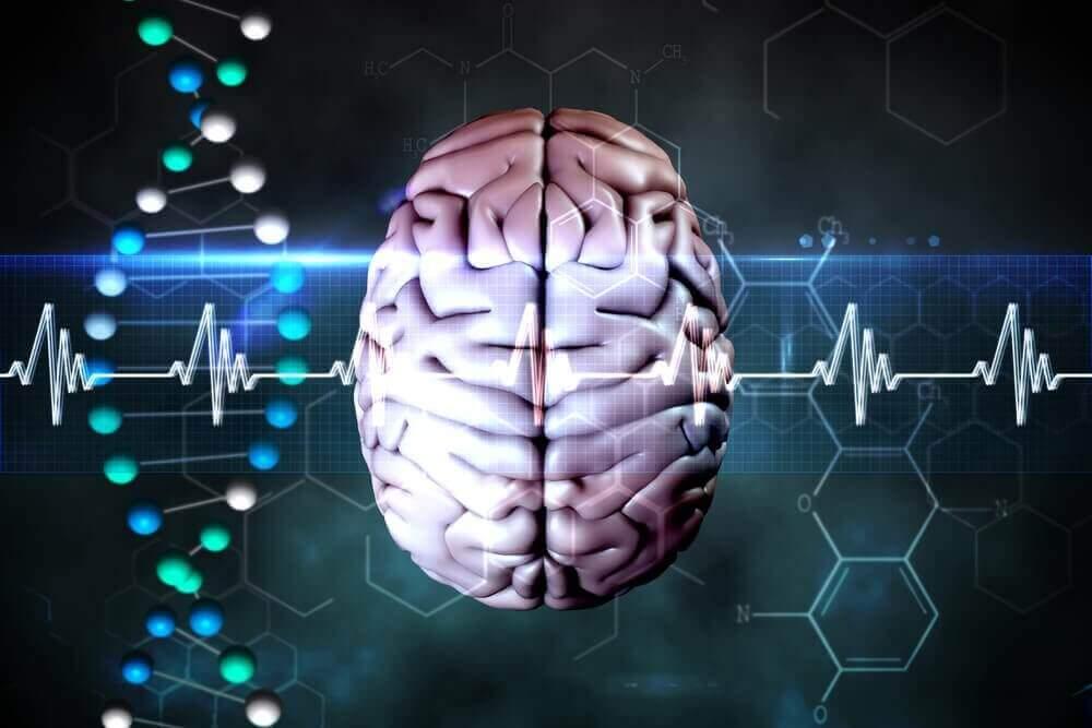 Het mechanisme van de hersenen