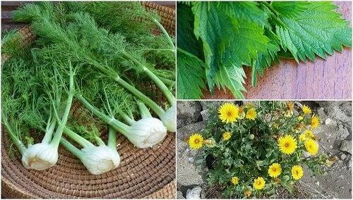 Maak kennis met 8 verrassende eetbare planten