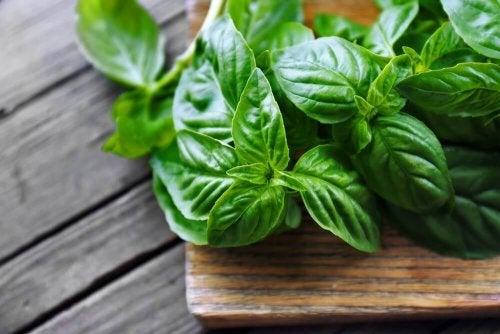 40 mogelijke gezondheidsvoordelen van basilicum