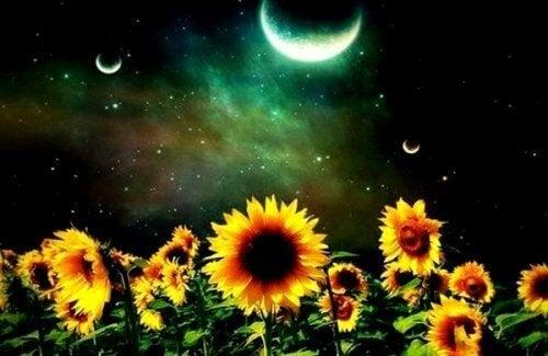Zonnebloemen in de nacht