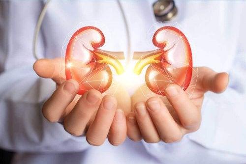 Probeer deze tips om je nieren te zuiveren