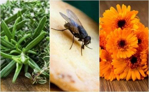 Vliegen verjagen met een paar effectieve huismiddeltjes