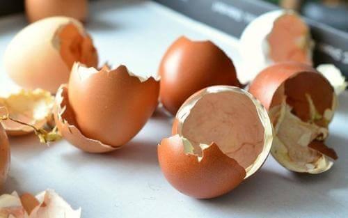 meerdere eierschalen