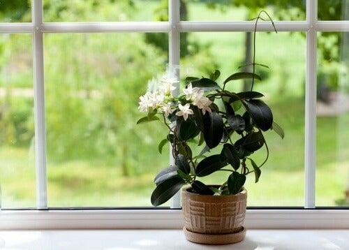 De planten water geven met ijsblokjes