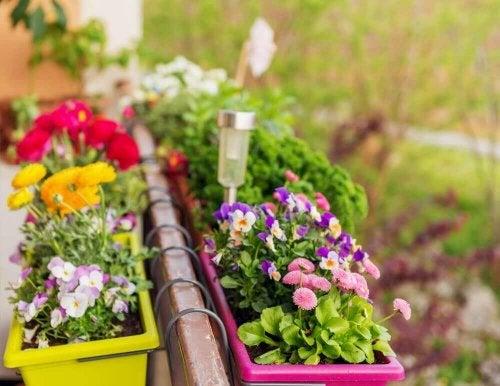 Bloemen in bloembakken aan het balkon