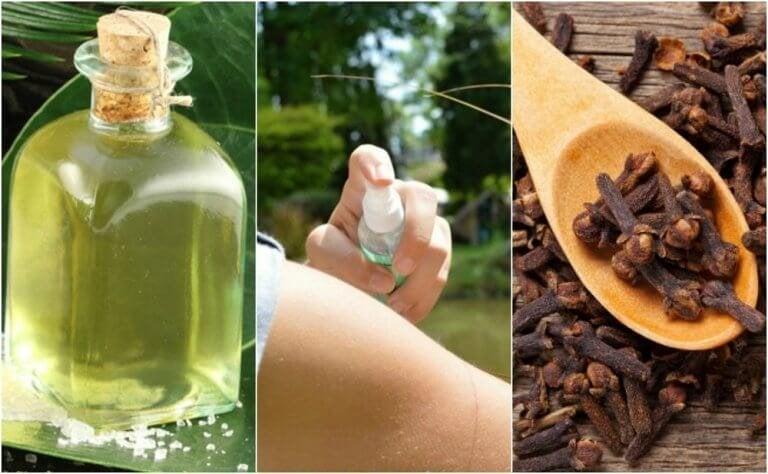 De 5 beste zelfgemaakte insecticiden