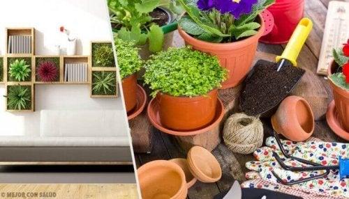Decoreren met planten om je huis te revitaliseren