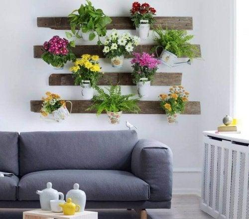 Kamerplanten hebben veel voordelen