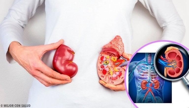 5 dingen die je moet weten over niertransplantaties