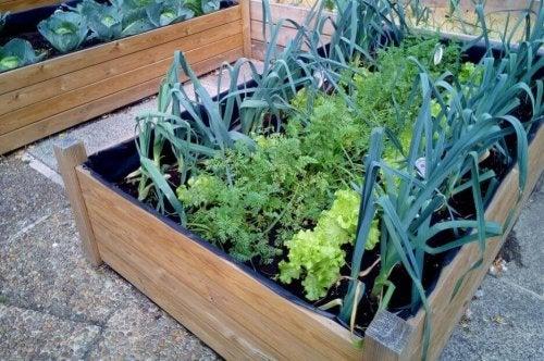 Modulaire groentetuintjes zijn handig