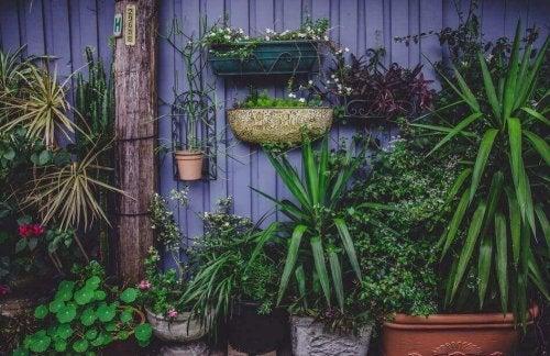 4 ontwerpen voor zelfgemaakte groentetuintjes