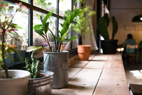 De gezondheidsvoordelen van planten in huis
