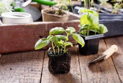 Plantjes verpotten