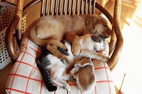 Een kat en een hond in een stoel