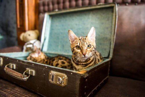 Kat ligt in een koffer
