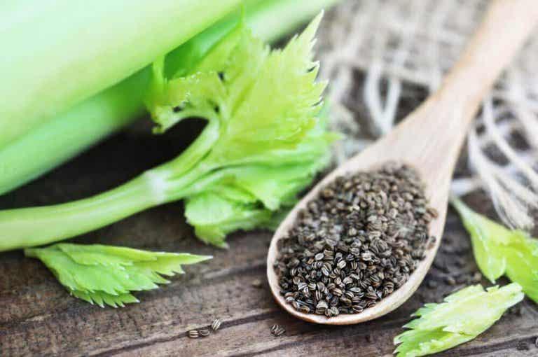 Selderijzaden: een natuurlijke thee voor hoge bloeddruk