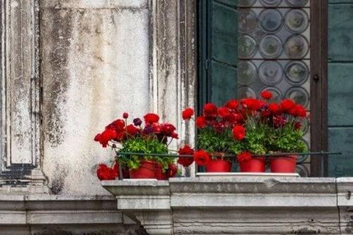Vijf bloemsoorten voor op het balkon