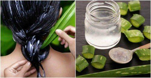 Aloëvera is een natuurlijk vochtinbrengend middel voor het haar en de hoofdhuid