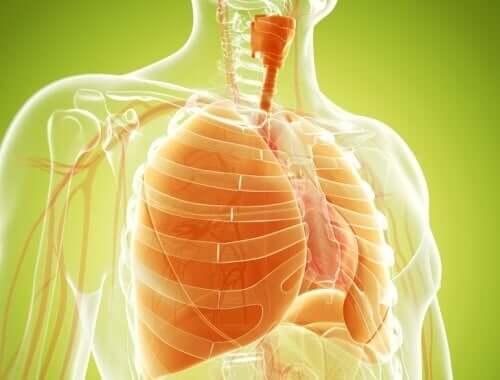 Hoe je de longen ontgiften kan met natuurlijke remedies
