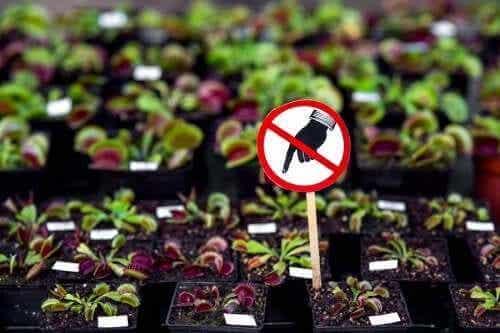 7 gevaarlijke planten die je thuis moet vermijden