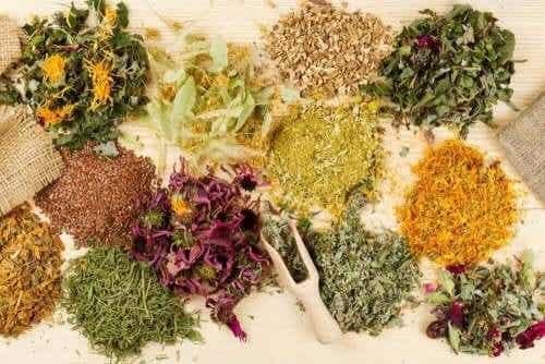 Geneeskrachtige kruiden die buikpijn helpen verlichten
