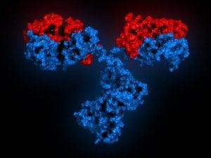 Soorten antilichamen
