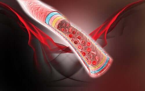 Vier natuurlijke remedies voor de bloedcirculatie