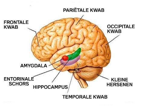 Hoe depressie je hersenen fysiek beïnvloedt
