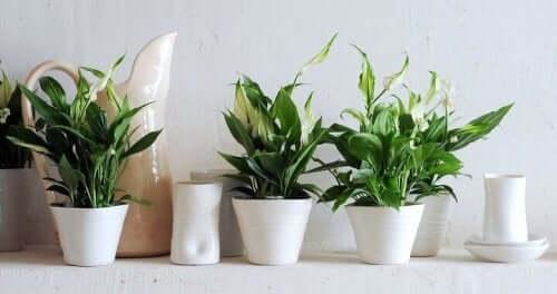 Kamerplanten op een rij
