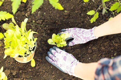 Planten verplanten