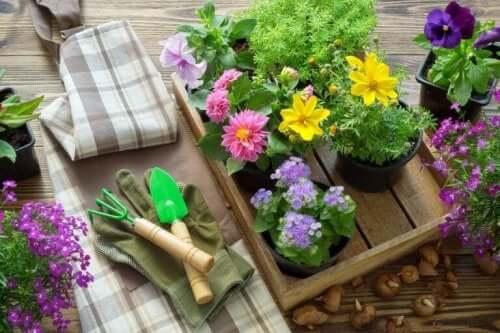 Tuingereedschap en nieuwe plantjes