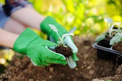 Aandachtspunten bij het verplanten van planten