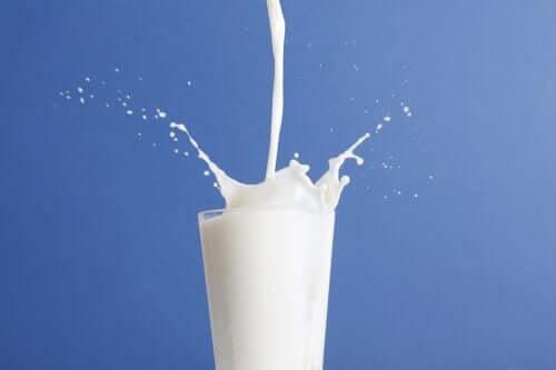 Volle melk versus magere melk: welke is beter?