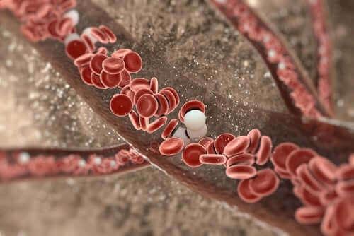Rode bloedcellen in de bloedvaten