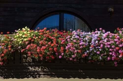 Vijf geurende bloemen voor een kleine tuin