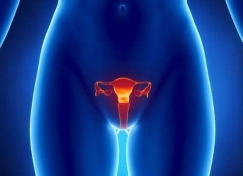 Baarmoeder en eierstokken