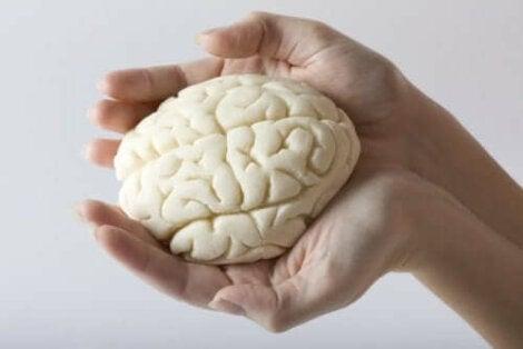 Handen die hersenen vasthouden