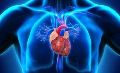 Locatie van het hart in het lichaam