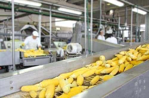 De invloed van voedselbewerking op de voedingswaarde van voedingsmiddelen