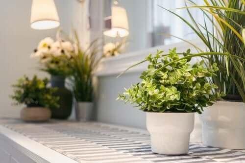 Planten in de woonkamer
