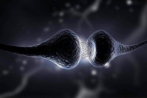 zenuwoverdracht