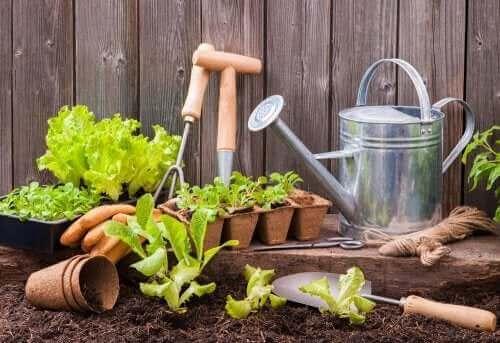 Welk tuingereedschap heb je nodig voor een stadstuin