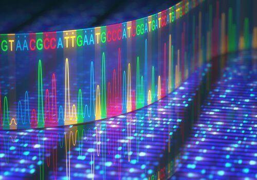 DNA in kleurtjes verdeeld